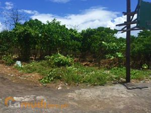 Fertile Land in Albay