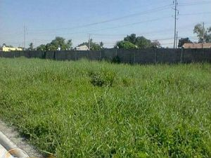 Farm Lot for Sale in BCD