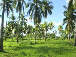 Farm Lot in Bohol for Sale