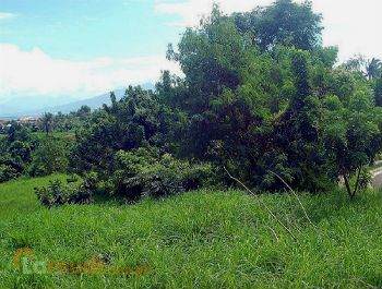 Lot for Sale Bacoor Cavite
