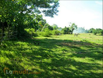 Farm Lot for Sale in Batangas City