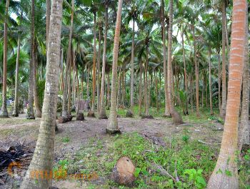 Beach Lot for Sale in Quezon