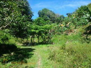 Farm Lot for Sale in Cebu
