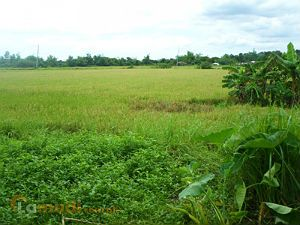 Vacant Land in the Home of the Hundred Islands